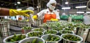 Lee más sobre el artículo AISLASUR, referente en la industria agroalimentaria andaluza